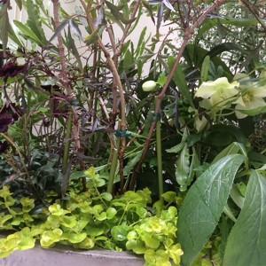 多彩なグリーンが建物と調和するスタイリッシュな中庭