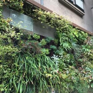 豊かな緑量で演出する爽やかなテラス空間