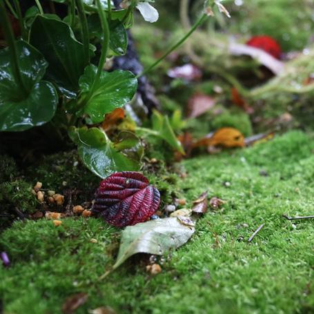 HIBIYA PARK Gardening show2017