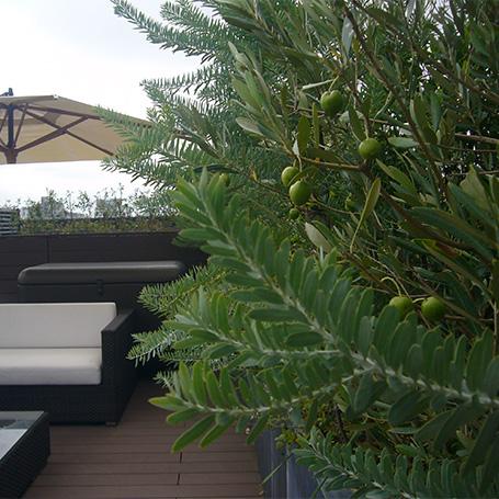 圧倒的な緑量で演出する癒しの屋上空間