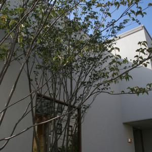 植栽で彩るウッドデッキ